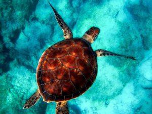 tartaruga-marina-caretta-caretta-salviamo-il-mondo